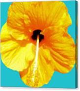 Hibiscus Test 4 Canvas Print
