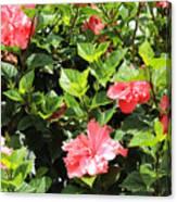 Hibiscus Tree Canvas Print