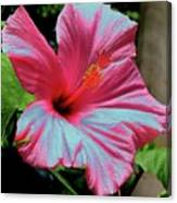 Hibiscus With A Solarize Effect Canvas Print