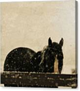 Hickory Canvas Print