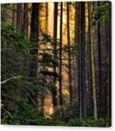 Hidden In The Forest Canvas Print