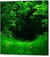 Hidden Meadow Canvas Print