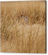 Hidden Mule Deer Canvas Print