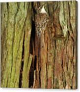 Hidden On The Tree Canvas Print