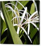 Hidden Swamp Lily Canvas Print