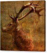 Hide And Seek 2015 Canvas Print
