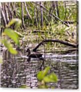 Hide And Seek Ducks Canvas Print
