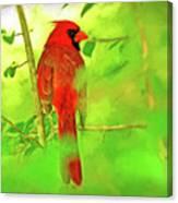 Hiding Behind The Leaves - Male Cardinal Art Canvas Print