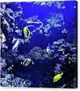 Hiding Fish Canvas Print