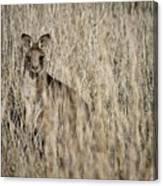 Hiding In Plain Sight Canvas Print