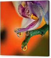 Hiding Ladybug Canvas Print