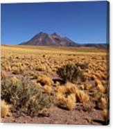 High Altitude Puna Grasslands And Miniques Volcano Chile Canvas Print