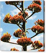 High Country Red Bud Agave Canvas Print