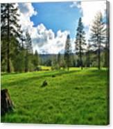 High Meadow Canvas Print