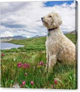 High Meadow With Eyes To The Sky Canvas Print