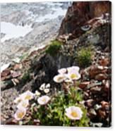 High Mountain Flowers Canvas Print
