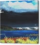 High Tide Swans Canvas Print