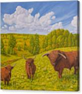 Highland Cattle Pasture Canvas Print