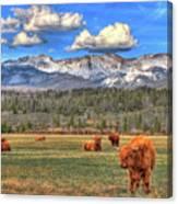 Highland Colorado Canvas Print