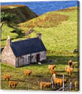 Highland Cottage With Highland Cattle Canvas Print
