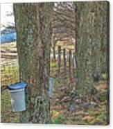 Highland County Va Virginia - Monterey - Mcdowell - Maple Harvest Canvas Print