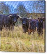 Highland Family Canvas Print