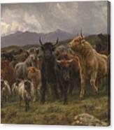 Highland Raid Canvas Print