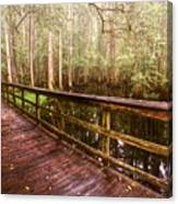 Highlands Hammock Canvas Print