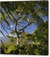 highlands in Costa Rica 2 Canvas Print
