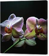 Highlighted Orchids Canvas Print