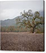 Highway Oak Canvas Print