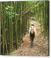 Hiker In Bamboo Forest Canvas Print