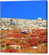 Hikers And Autumn Tundra On Mount Yale Colorado Canvas Print