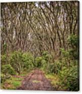 Hiking On Rangitoto New Zealand Canvas Print