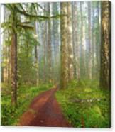 Hiking Trail In Washington State Park Canvas Print