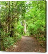 Hiking Trail Through Forest Along Lewis And Clark River Canvas Print