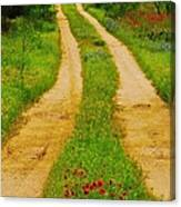 Hill Country Backroad Canvas Print