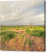 Hill Country Memories Canvas Print