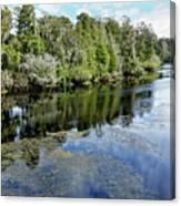 Hillsborough River 7 Canvas Print
