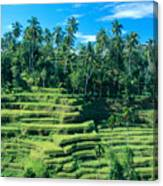 Hillside In Indonesia Canvas Print