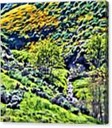 Hillside Poppies - Impressions Two Canvas Print