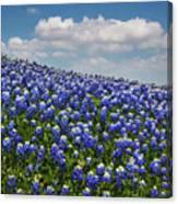 Hillside Texas Bluebonnets Canvas Print