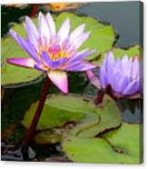 Hilo Water Lily 2 Canvas Print