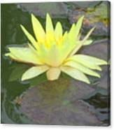 Hilo Water Lily 4 Canvas Print