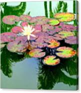 Hilo Water Lily 5 Canvas Print