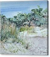 Hilton Head Beach Fauna Canvas Print