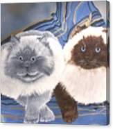 Himalayan Cats  Canvas Print