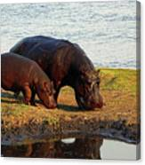 Hippo Mother And Child - Botswana Africa Canvas Print