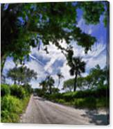 Historic Jungle Trail Vero Bch Fl V Canvas Print