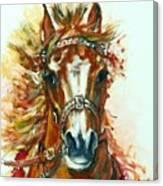 Hmar Pur-sang Arabe Canvas Print